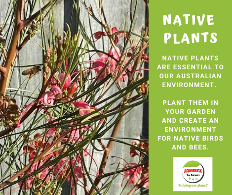 FB_native Plants