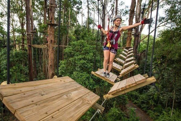 TreeTop Sunshine Coast